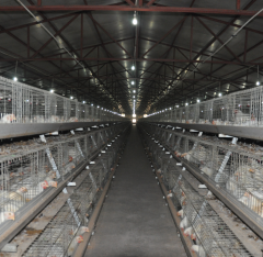 A Type Broiler Cages